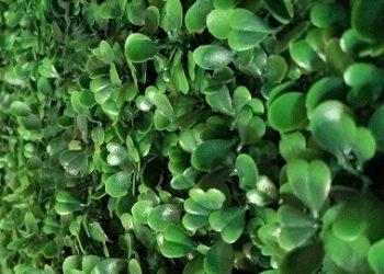 182597166_zelenaya-stena-green